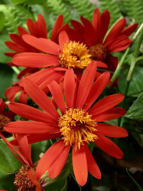 flowers oranges petals orange flower