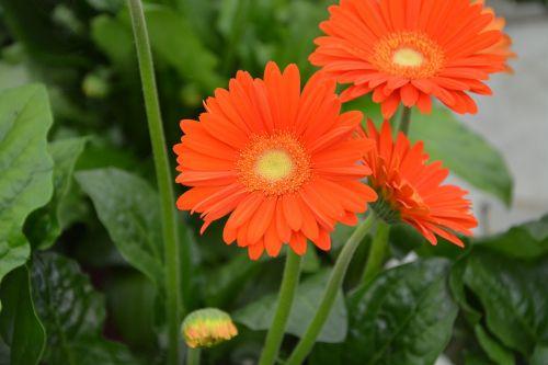 flowers petals oranges nature