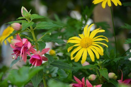 flowers solid colors bouquet