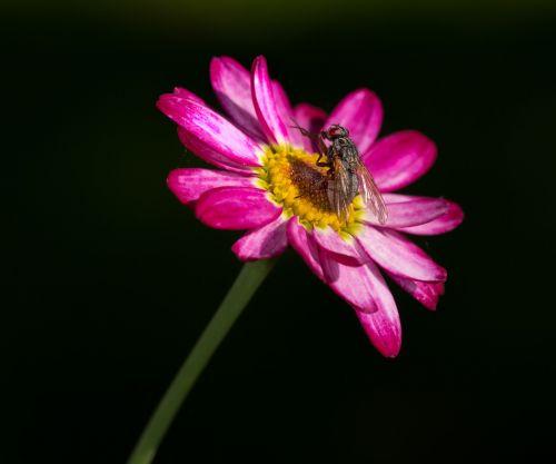 flue flower pink