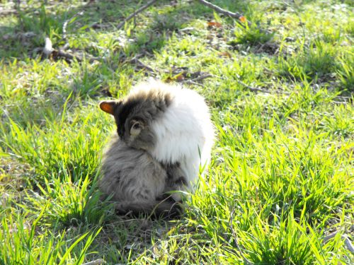 Fluffy Calico Cat On Grass