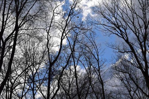 fluffy clouds blue sky clouds