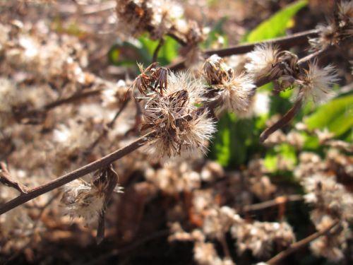 Fluffy Weed Macro 1