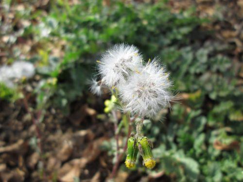 Fluffy Weed Macro 3