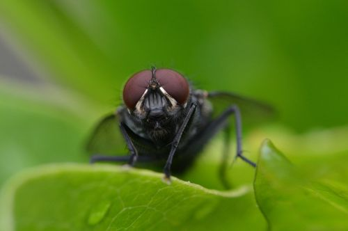 fly insect close