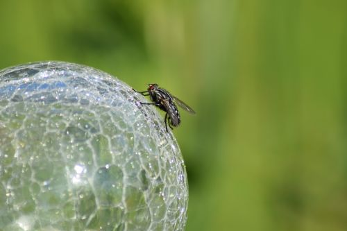 fly crystal ball ball