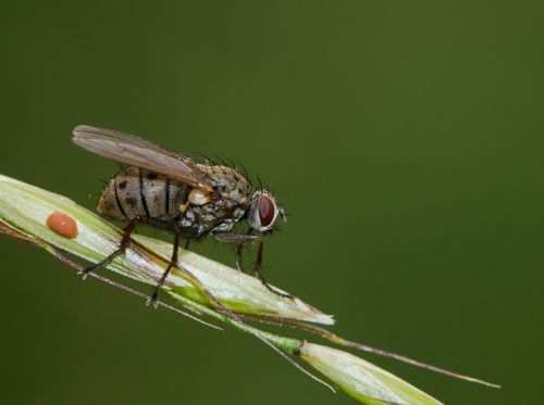 fly nature animal