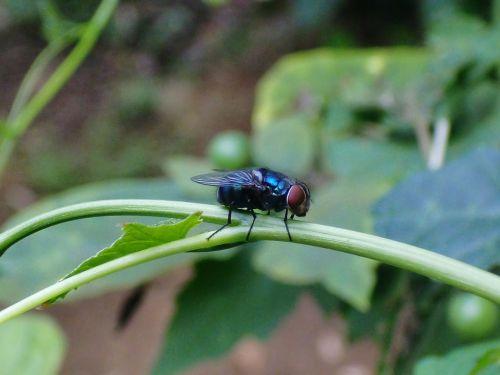 fly garden macro