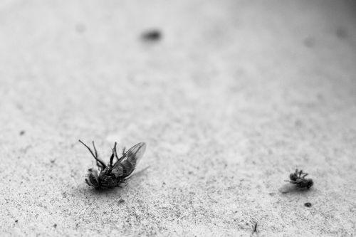 fly dead ants