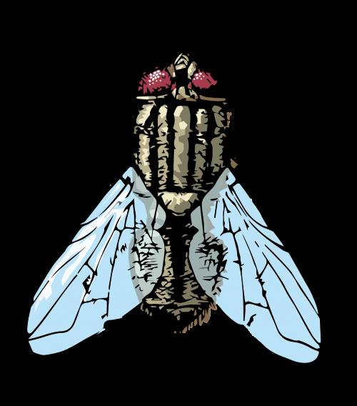 fly housefly bug