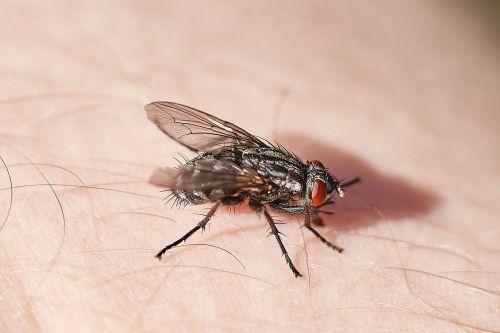 fly skin unpleasant