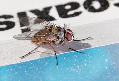 fly macro close
