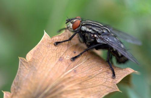 fly leaf macro