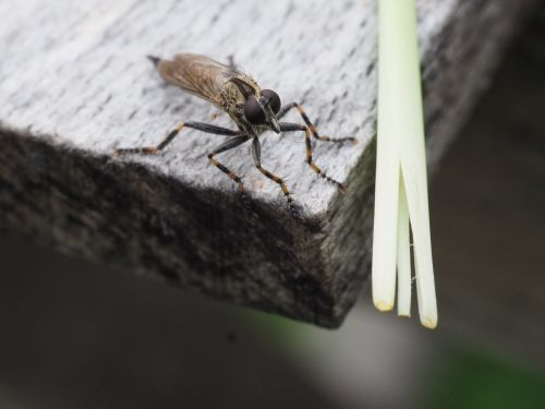 fly insect wood