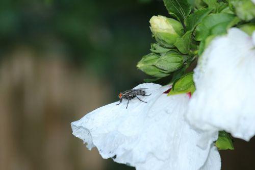 fly macro animal