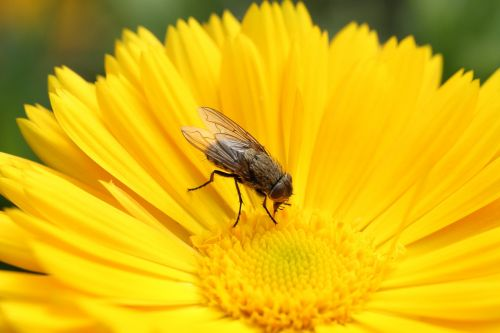 fly flower nature