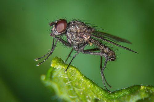 fly macro public record