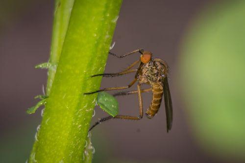 skristi,makro,viešas įrašas,vabzdys,gamta,Uždaryti,gyvūnas,jungtinės akys,žalias,vabzdžių makro,skrydžio vabzdys