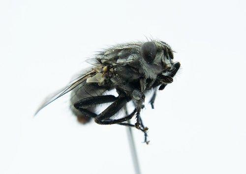 fly  macro  close up