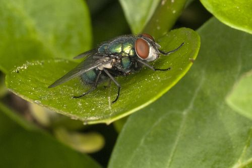 fly wings wing