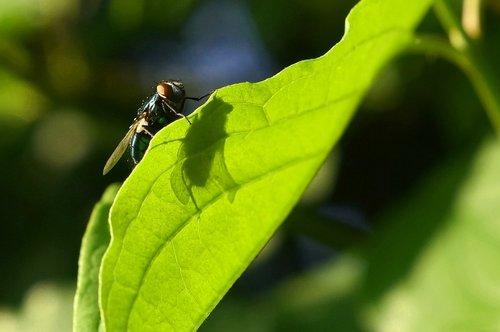 fly  shadow  leaf