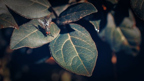 fly  insect  insects