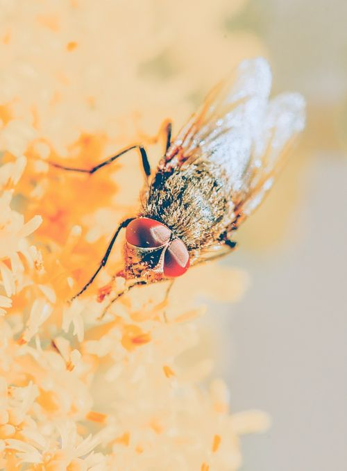 fly compound eyes close
