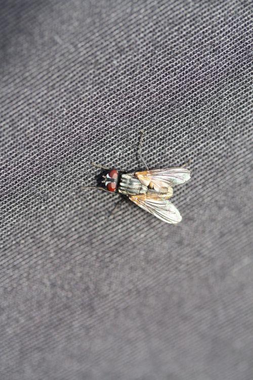 fly canvas gray