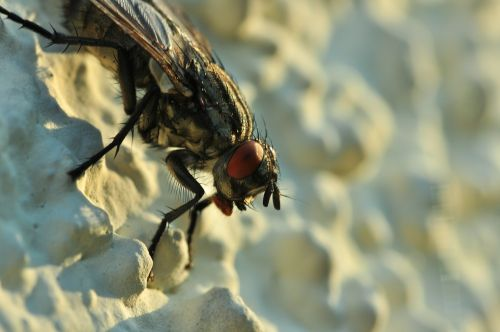 fly close insect