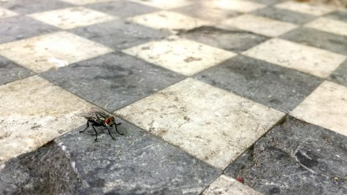 Fly On A Chessboard
