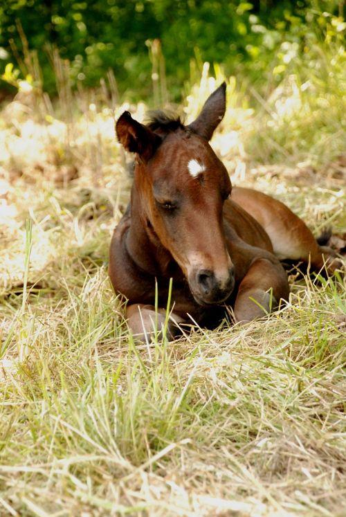 foal colt summer