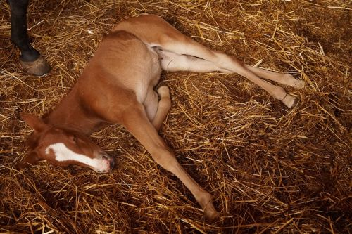 foal campaign rest