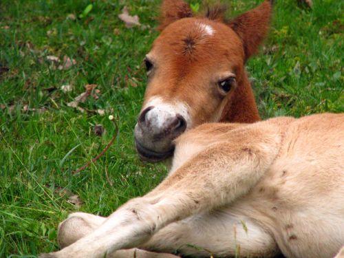Foal In Close-up