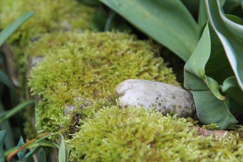 foam  lichen  carpet foam