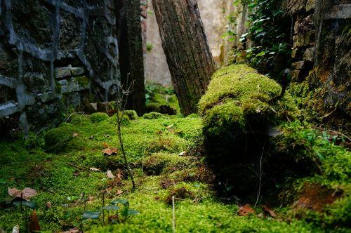 foam abandoned nature