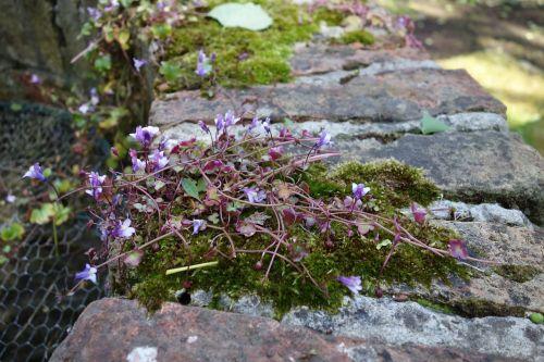 foam flowers purple