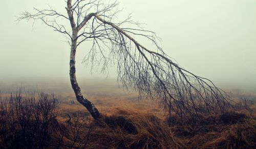 fog moor moorland