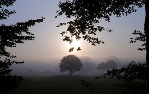 rūkas,ryto migla,žemės rūkas,saulė,mistinis,medžiai,kraštovaizdis,nuotaika,morgenstimmung,gamta,rūkas,ruduo,tylus,atgal šviesa,pieva,migla,saulės šviesa,lapija,rytas,Münsterland,plokščią žemę,westfalen,Vokietija