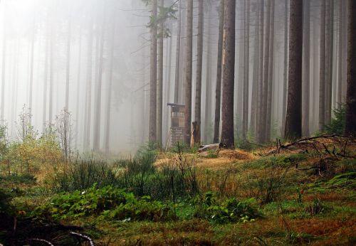 fog forest perch