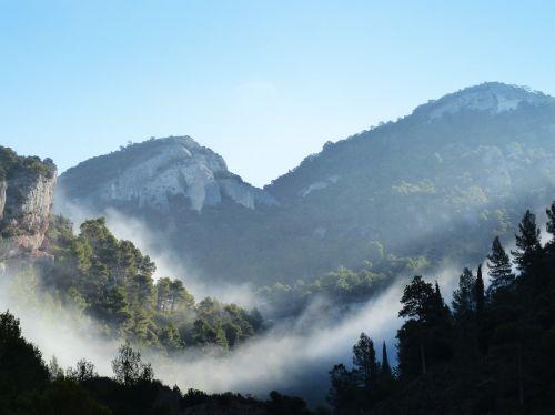 fog mountain trees