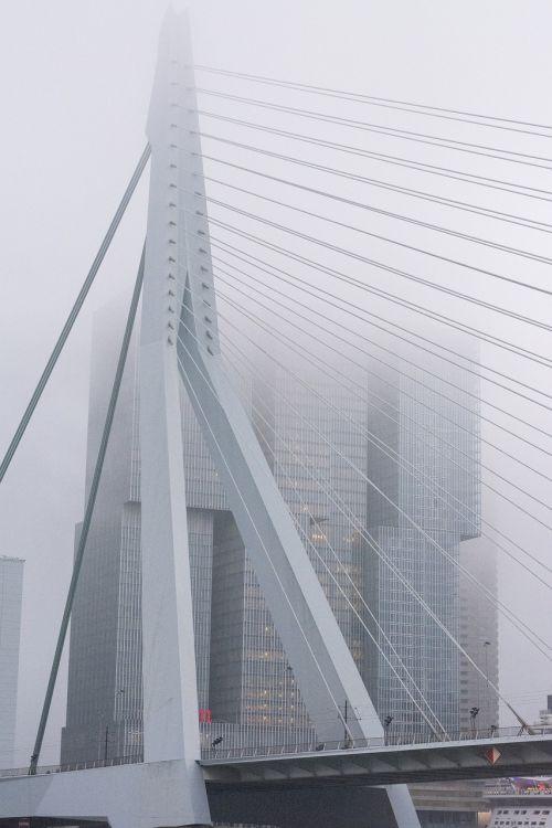 fog bridge rotterdam