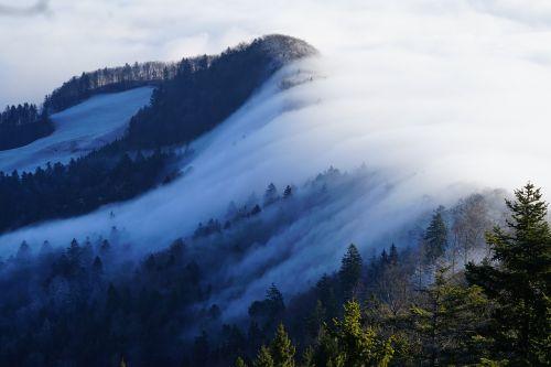 fog nebellandschaft wave of fog
