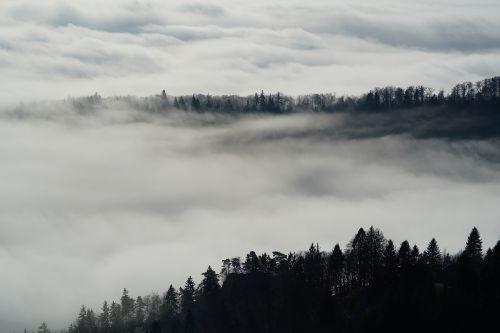 fog nebellandschaft forest