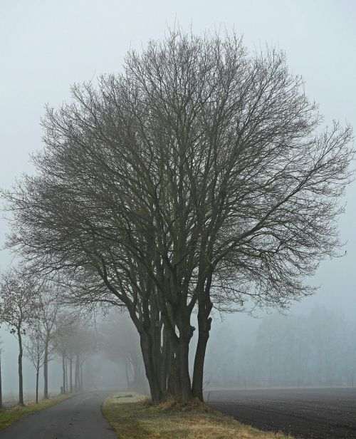 fog winter's day protected landscape area