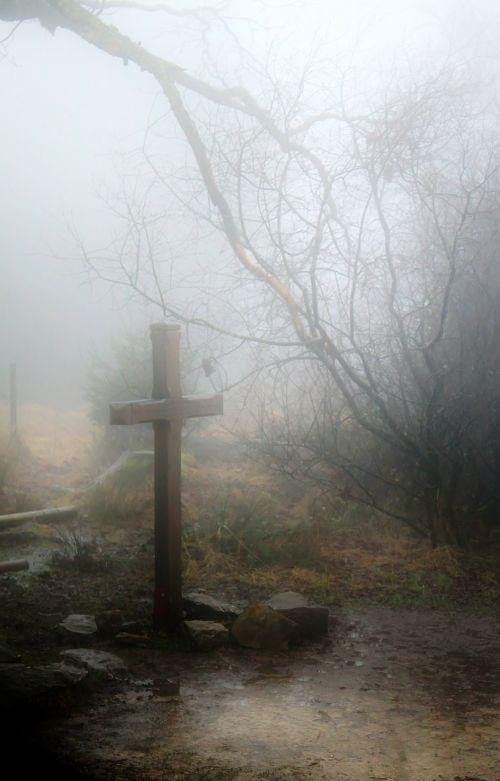 fog autumn forest