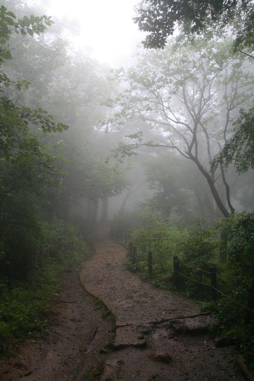fog forest enchanted forest