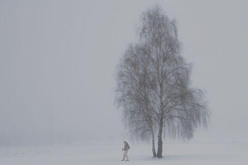 fog birch winter
