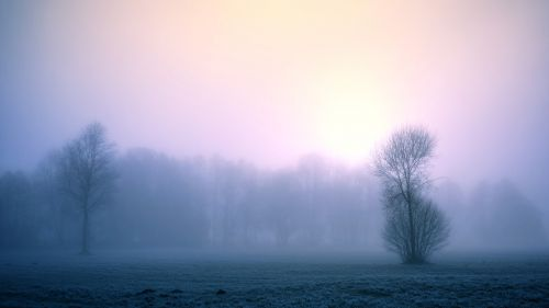 fog nature dawn