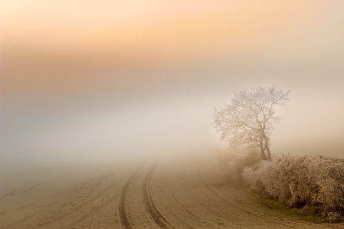 fog dawn landscape