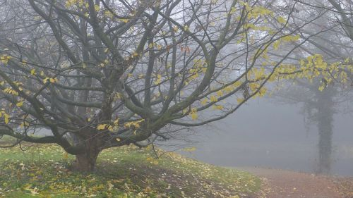 fog autumn november